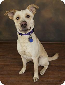 Labrador Retriever Mix Dog for adoption in Anchorage, Alaska - Champ
