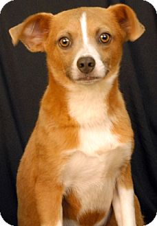 Terrier (Unknown Type, Medium) Mix Dog for adoption in Newland, North Carolina - Wheeler