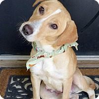 Adopt A Pet :: Fran - Baton Rouge, LA