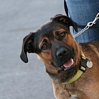 Adopt A Pet :: Bruno - Palmdale, CA