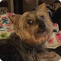 Adopt A Pet :: Buddy - Canton, IL
