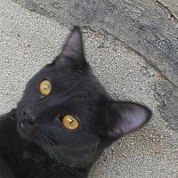 Adopt A Pet :: Vivienne - San Fernando Valley, CA