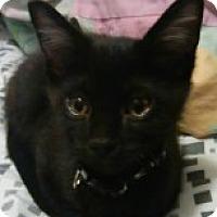 Adopt A Pet :: Luke - McHenry, IL