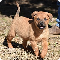Adopt A Pet :: Trina - South Dennis, MA