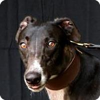 Adopt A Pet :: Sav's Airmail - Douglasville, GA