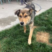 Adopt A Pet :: LIZZY - Spruce Grove, AB