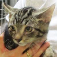 Adopt A Pet :: Pickens - Memphis, TN