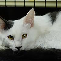 Adopt A Pet :: Wiggins - College Station, TX