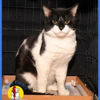 Adopt A Pet :: Batman - Wooster, OH