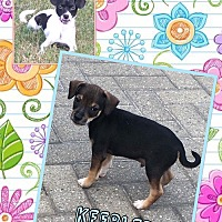 Adopt A Pet :: Kebbler - Fort Wayne, IN