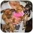 Photo 3 - Chihuahua Puppy for adoption in Poway, California - 5 CHIHUAHUA PUPPIES