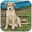 Photo 3 - Labrador Retriever Mix Dog for adoption in Plainfield, Connecticut - Nancy...Reduced fee $300