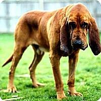 Adopt A Pet :: Jake - Georgetown, KY