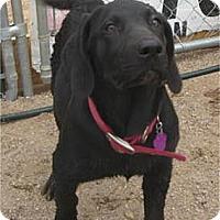 Adopt A Pet :: Jenna - Golden Valley, AZ