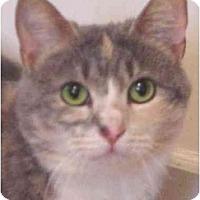 Adopt A Pet :: Gigi - Chesapeake, VA