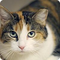 Adopt A Pet :: Cutie Pie in the Sky - Chicago, IL
