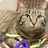 Adopt A Pet :: Phoenix - Chicago, IL