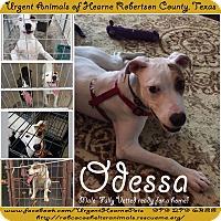 Retriever (Unknown Type) Mix Dog for adoption in Hearne, Texas - Odessa