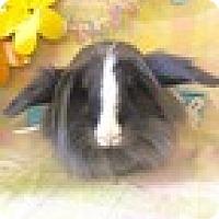 Adopt A Pet :: Max - Paramount, CA