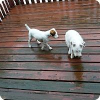 Adopt A Pet :: Samson - Wisconsin Dells, WI