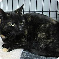 Adopt A Pet :: Aubrey - Norwich, NY