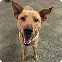 Adopt A Pet :: Edna Krabappel - Jersey City, NJ