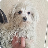 Adopt A Pet :: Markie ADOPTED!! - Antioch, IL