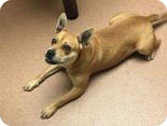 Pit Bull Terrier Mix Dog for adoption in Columbus, Georgia - Tila 9808