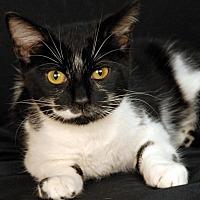 Adopt A Pet :: Sweetheart - Newland, NC
