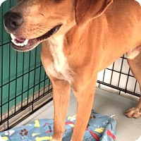Hound (Unknown Type) Mix Dog for adoption in Bryan, Texas - Otis