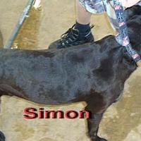 Adopt A Pet :: Simon - Coleman, TX
