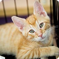 Adopt A Pet :: G'Kar - Stafford, VA