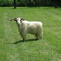 Adopt A Pet :: Grover - Gallatin, TN