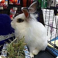 Adopt A Pet :: Suellen - North Gower, ON