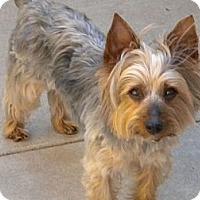 Adopt A Pet :: Sebastian - Orange County, CA