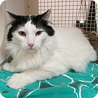 Adopt A Pet :: Hairy Callahan - Gilbert, AZ