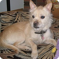 Adopt A Pet :: Chip - Mississauga, ON