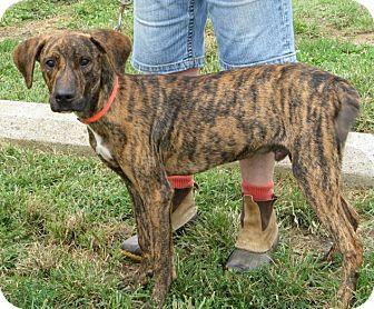 Hound (Unknown Type) Mix Dog for adoption in Richmond, Virginia - Jasper