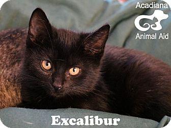 Domestic Mediumhair Kitten for adoption in Carencro, Louisiana - Excalibur
