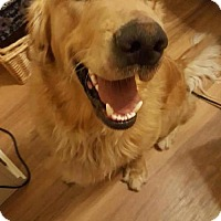 Adopt A Pet :: Dude - Murrells Inlet, SC