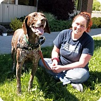 German Shorthaired Pointer Mix Dog for adoption in Bellingham, Washington - River