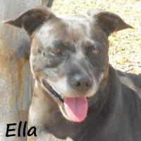 Adopt A Pet :: ELLA - Palm Coast, FL