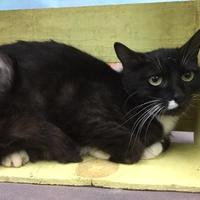 Adopt A Pet :: Kelsey - Tangent, OR
