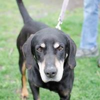 Adopt A Pet :: Elijah - Ann Arbor, MI