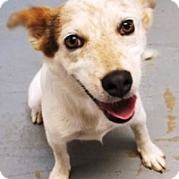 Adopt A Pet :: Cherry - Casa Grande, AZ