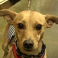 Adopt A Pet :: Colin - Newnan, GA
