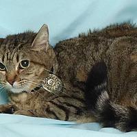 Adopt A Pet :: Jenny - Kerrville, TX