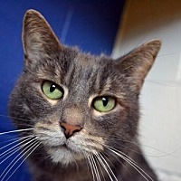 Adopt A Pet :: Remy - Akron, OH