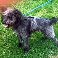 Adopt A Pet :: PRINCE - Rossford, OH