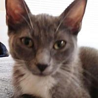 Adopt A Pet :: Aria - Los Angeles, CA